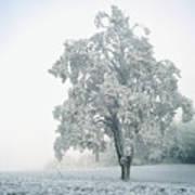 Snowy Winter Landscape Poster by John Foxx
