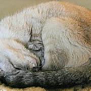 Snugglepuss Poster