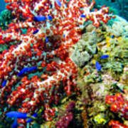 Soft Coral In Truk Poster