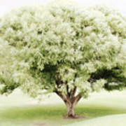 Soft Green Tree Poster