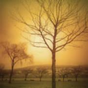 Soft Light In Summerland Poster