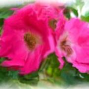 Soft Pink Flowers Poster