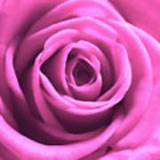 Soft Touch Pink Rose Poster