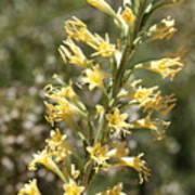 Soft Yellow Desert Flowers Poster