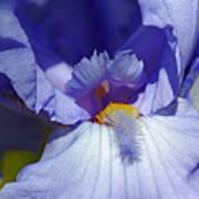 Softly Purple Poster