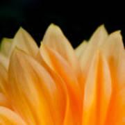 Softness Of The Petals Poster