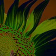 Solar Sunflower Poster