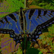 Solarized Butterfly Poster