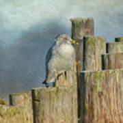 Solitary Gull Poster