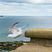 Solitary Seagull Take-off Poster