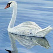 Solitary Swan Poster