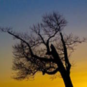Solitary Tree At Sunset Poster