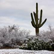 Sonora Desert Winter Poster