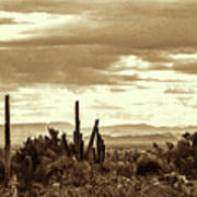 Sonoran Desert Mountains And Cactus Near Phoenix Poster