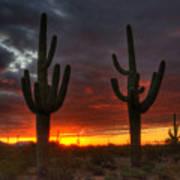 Sonoran Desert Sunrise 1 Poster