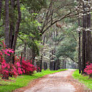 South Carolina Lowcountry Spring Flowers Dirt Road Edisto Island Sc Poster