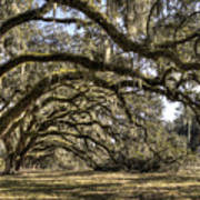 Southern Live Oaks With Spanish Moss Color Poster