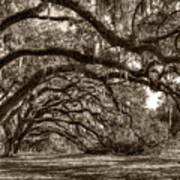 Southern Live Oaks With Spanish Moss Poster