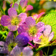Southern Missouri Wildflowers 1 Poster