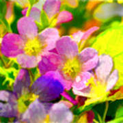 Southern Missouri Wildflowers 1 - Digital Paint 1 Poster