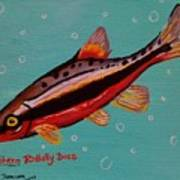 Southern Redbelly Dace Poster