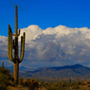 Southwest Saguaro Desert Landscape Poster