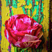 Soutime Rose Against Cracked Wall Poster