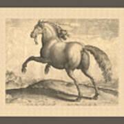 Spanish Horse Renaissance Engraving Poster