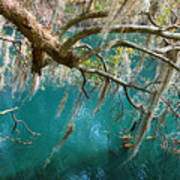 Spanish Moss And Emerald Green Water Poster