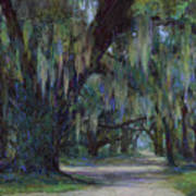 Spanish Moss Poster by Billie Colson
