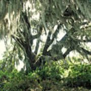 Spanish Moss In Motion Poster