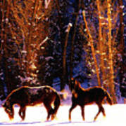 Spanish Mustangs Playing In The Powder Snow Poster