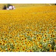 Spanish Sunflowers Poster