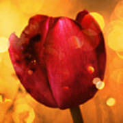 Sparkle Of The Tulip Poster by Cathie Tyler