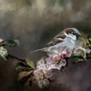 Sparrow In The Garden Poster