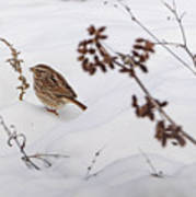 Sparrow In The Winter Snow Poster