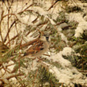 Sparrow In Winter Iv - Textured Poster by Angie Tirado