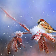 Sparrow In Winter Poster