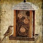 Sparrow On The Feeder Poster