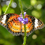 Speckled Butterfly Poster