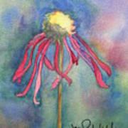 Spent Flower Poster