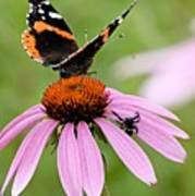 Spider And Butterfly On Cone Flower Poster
