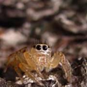 Spider Eyes Poster