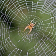 Spider In A Dew Covered Web Poster