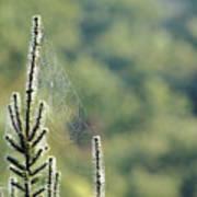 Spider Silk Poster