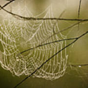 Spiders Web Poster