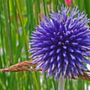Spiky Blue Poster
