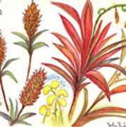 Spiky Florida Flowers Poster