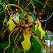 Spindly Orchid Poster