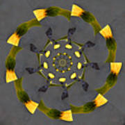 Spiraling Gerberas Poster